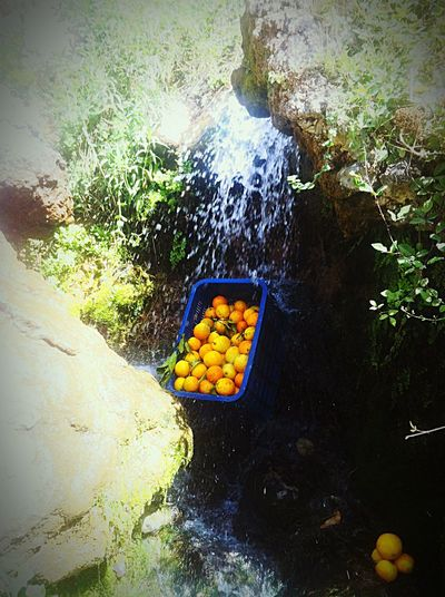 Orange Oranges Morocco Chaouen Chefchaouen Traveling Streetsofmorocco EyeEm Gallery EyeEmBestPics EyeEm Best Shots EyeEm Best Edits Eyeemphotography Nature