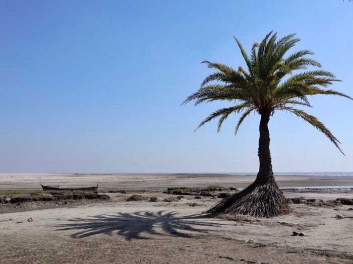 Shadow or the tree Sky Land Tranquil Scene Nature Plant Tranquility Tree Beach Beauty In Nature Sea