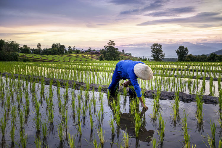 Full length of man working in rice paddy against sky