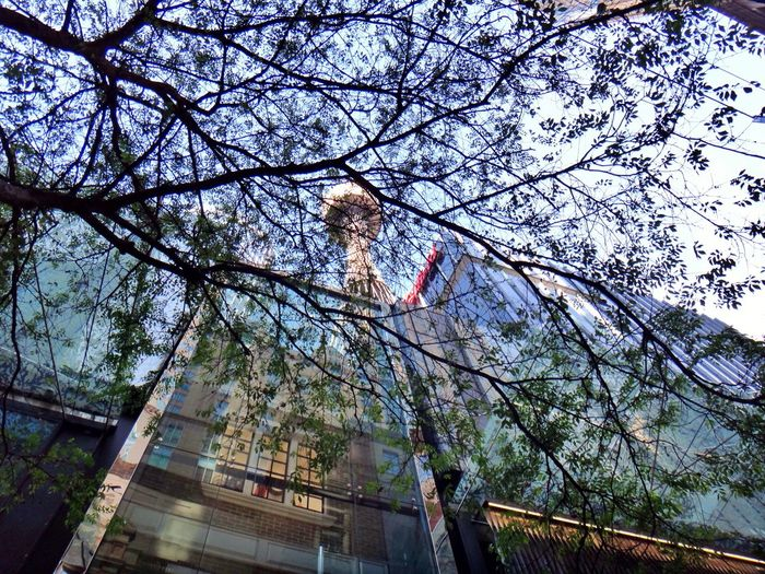 Looking up at the Sydney Tower through tree branches from Pitt Street Mall Lookingup Looking Up Sydney Tower Sydney Pitt Street Pitt Street In Sydney Australia Architecture Tree Branches Building Building Exterior City Urban Urban Geometry Travel Destination EyeEmAustralia Sydney, Australia Buildings Highrise City Center Center Reflection Fine Art Photography Adapted To The City