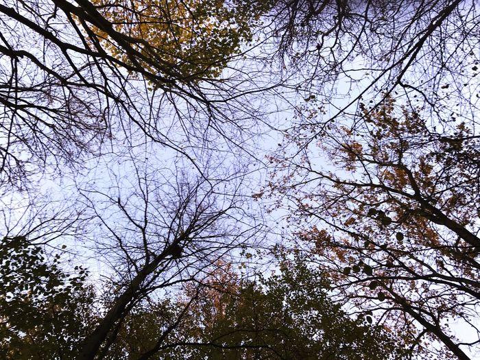 Scenics Tree