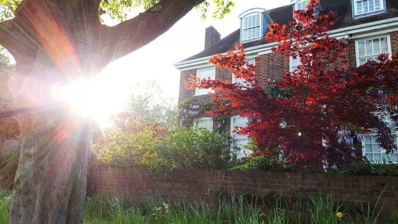 Spring Sunshine Trees Bush LONDON❤ Lovelyday💛 No Filter EyeEm Gallery