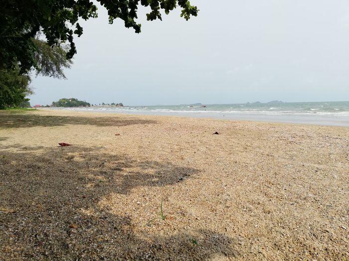 Tree Sea Water Beach Sand Sky Horizon Over Water Landscape Seascape Coast Wave