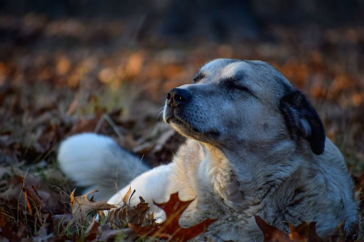 Close-up of a dog on field during autumn