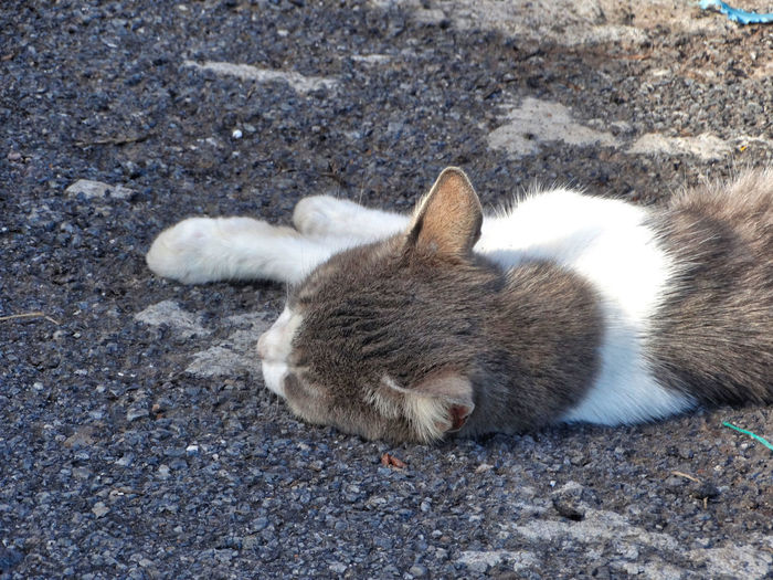 Cat laying in the sun. Animal Themes Animal One Animal Mammal Vertebrate Domestic Pets Domestic Animals No People Day High Angle View Domestic Cat Cat Nature Relaxation Animal Wildlife Land Feline Outdoors Close-up Whisker Cats