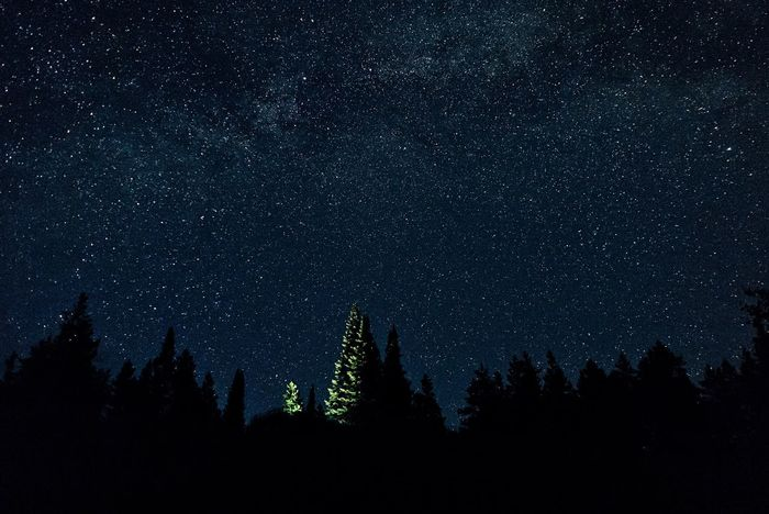 This, above us. Nightphotography Beauty In Nature Naturephotography Nature Photography Outdoors Adventure Tree Trees And Sky Trees Sky Night Sky Stars View Landscape