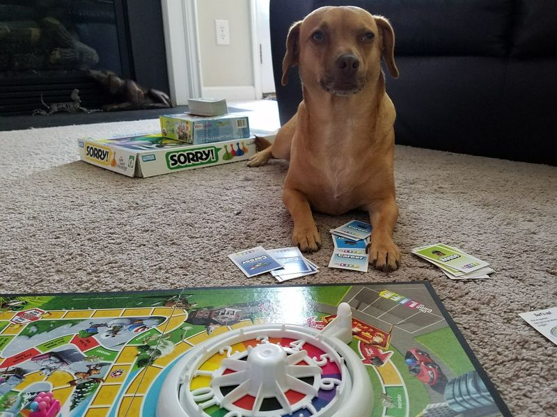 EyeEm Selects Life & Ruby Puppy Dog Dogs Of EyeEm Dogphotography Brown Colorful Rainbow Games Play Board Game Boredgame Family Family Time Fun Cute Game Paws Sorry
