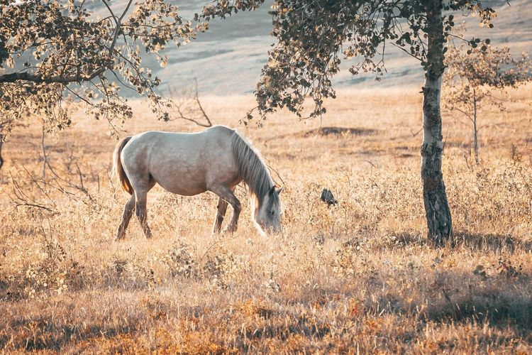 Side view of horse standing on land