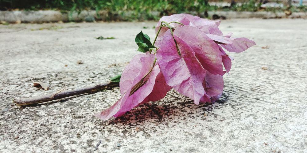 Leaf Pink Color