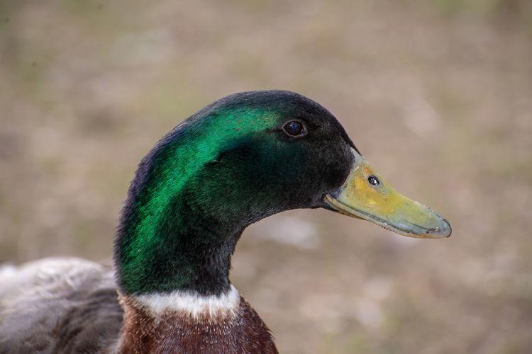 Close-up of bird