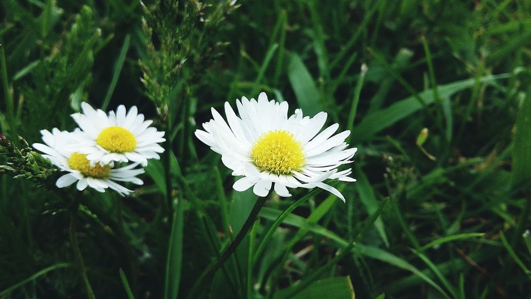 Nature EyeEm Nature Lover Nature_collection Flowers Spiring Spiringcollection Grass Green