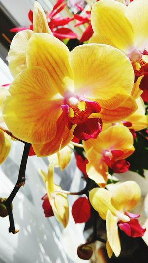 Orchids Orchidee My Photography Nature Plant My Art