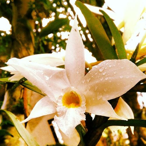Follow me @Simon_218 Meghalaya Flower Flowerafterrain RainDrop rain natural nature photography photooftheday photoofinstagram shillong instagram blooms