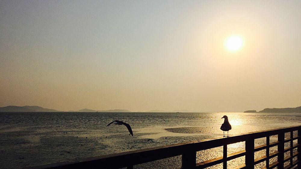 Birds Bird Sunset Beach Check This Out Hello World Hi! Relaxing Taking Photos Enjoying Life IPhoneography Iphonography IPhone Iphonephotography ByAlex