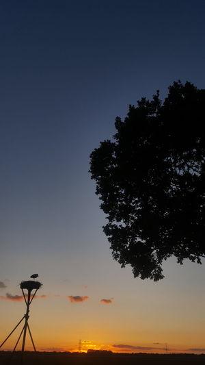 Sun set in