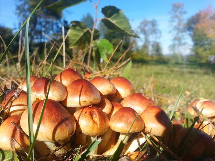 Tree Close-up Sky Plant Fungus Mushroom Uncultivated Edible Mushroom Growing Flora