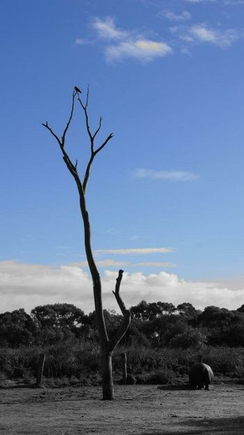 Bare Tree Landscape Tranquil Scene Branch Tranquility Tree Non-urban Scene Sky Scenics Blue Dead Tree Cloud - Sky Travel Destinations Solitude Nature Tourism Dried Plant Remote Death Dead Plant Zoo No People Day Outdoors Tranquility