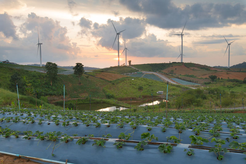 Panoramic view of windmills on landscape against sky