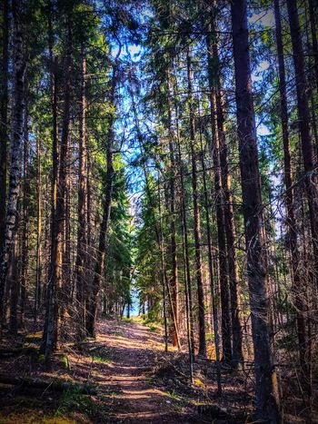 Tree Tree Trunk Forest Nature WoodLand Beauty In Nature Tranquility Tranquil Scene Scenics Growth Non-urban Scene Landscape Day Outdoors No People Tree Area Sky Woods Forrest Light And Shadow Light Through The Trees The Week On EyeEm