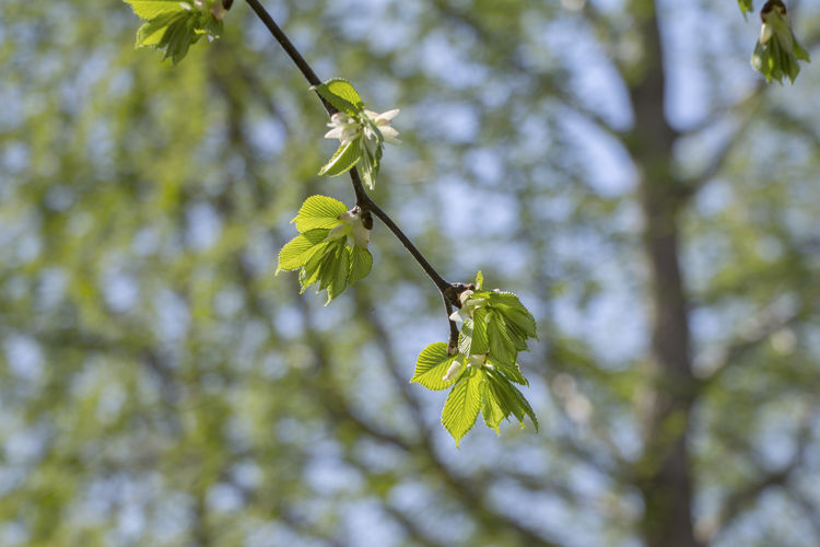 Apelbloesem Appleblossom Beauty In Nature Bladeren Branch Close-up Day Focus On Foreground Green Green Color Growth Leaf Lent Nature New Life Nieuw Leven No People Outdoors Plant Selective Focus Sky Springblossoms Tranquility Tree Twig