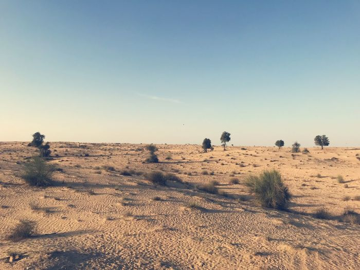 Arid Climate Beauty In Nature Clear Sky Climate Copy Space Day Desert Environment Field Group Of People Land Landscape Nature Non-urban Scene Outdoors Plant Real People Sand Scenics - Nature Sky Tranquil Scene Tranquility