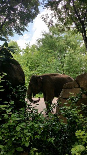 Zoo Makesmesmile Outdoors Good Life Zoo Day ZooLife Zoophotography Zoo Animals  Zoo Elephant Elephant Happy Perspective