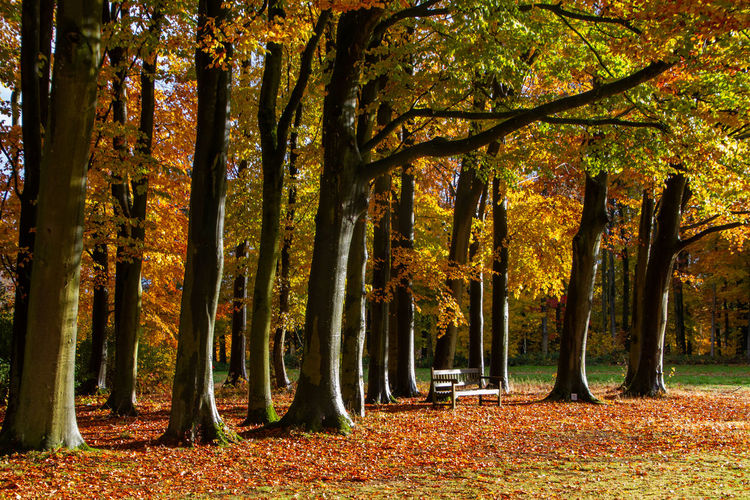 Tree Autumn Plant Change Beauty In Nature Tree Trunk Land Nature Trunk Tranquility Plant Part Leaf Forest Growth Tranquil Scene No People Scenics - Nature Orange Color Outdoors Park WoodLand Leaves Fall Autumn Collection