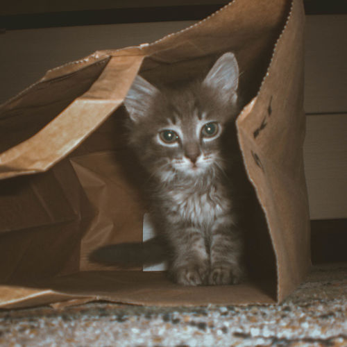 Cat Cats кот котэ