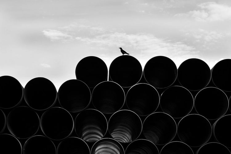 Crow Sky Cloud - Sky Pipe - Tube No People Silhouette Bird Vertebrate Animal Low Angle View Animal Themes Circle Shape Nature Industry Architecture Geometric Shape Day Animals In The Wild Outdoors Metal City Barrier