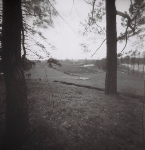Mopinhole Pinhole Film Photography Blackandwhite Bw_collection Filmphotography Forest Film Pinhole Tree Plant Land Sky Nature Landscape Tranquility No People Field Environment Tree Trunk Day Tranquil Scene Trunk Grass Outdoors Bare Tree Beauty In Nature Branch Scenics - Nature