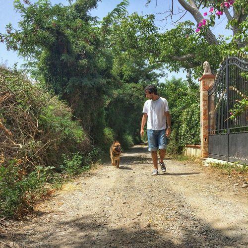Full length of dog on landscape against trees