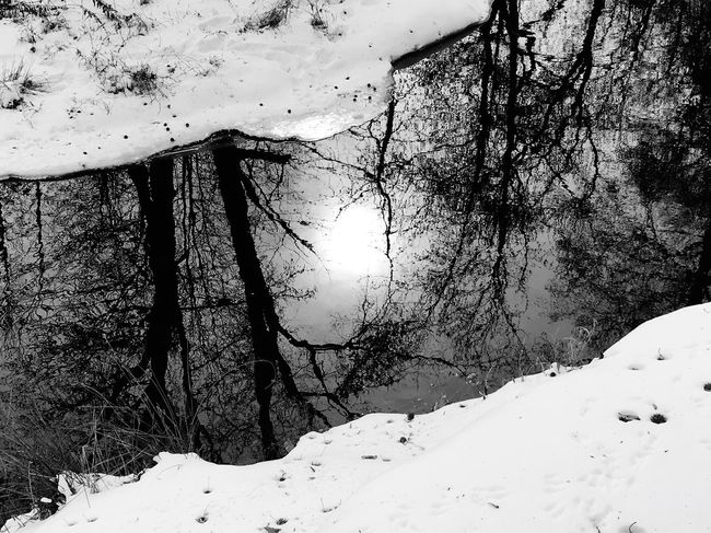 Inking water reflects the noontime sun in a slow moving stream on a cold January day in South Jersey EyeEm Nature Lover Eyeemphotography Njphotographer Nj South Jersey New Jersey Photography Reflection Snow Winter Cold Temperature Tree Nature Beauty In Nature Tree Trunk Tranquility Landscape Outdoors Branch Weather Scenics Tranquil Scene Day No People Bare Tree Forest Mountain Sky 10