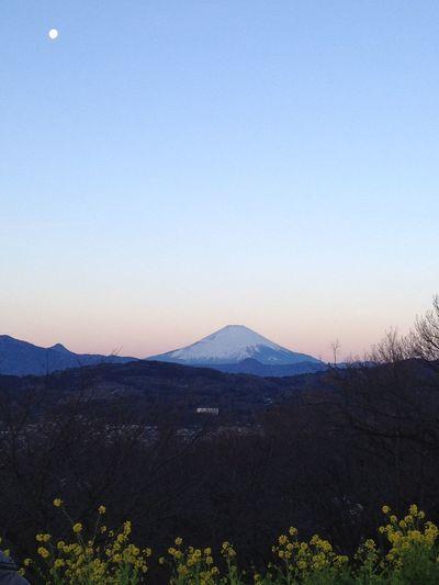 fujisan Fujisan Rape Blossoms Moon First Sunrise Of The Year