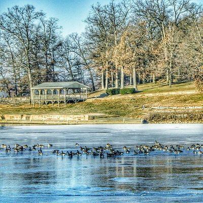 On Frozen Pond Galesburg, Illinois Trb_blue2 Trailblazers_rurex Trb_members1 Ig_bshots shutterbug_collective reflecting_perfection rsa_rural bipolaroid_asylum bpa_hdr trb_creature_feature igaa jj_unitedstates nature_perfection pocket_allnature pocket_hdr roadwarrior_hdr