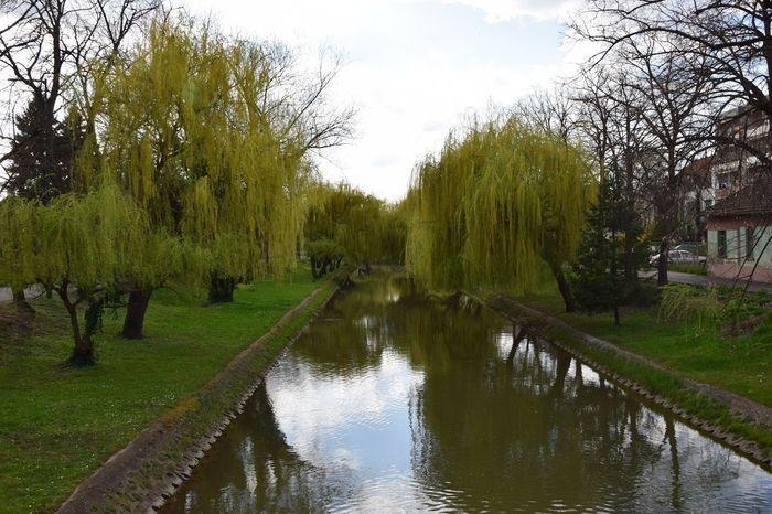 Tree Water Nature Beauty In Nature No People Myhometown ılovemycity Beautifulplace Gyula, Hungary