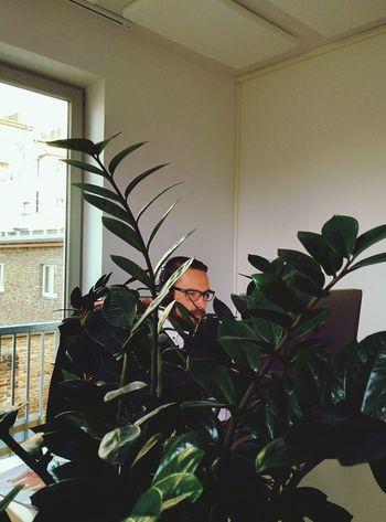 Jan In A pot plant.