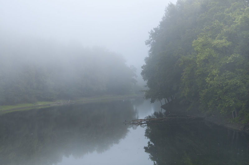 Early Morning Fog & Tree Beauty In Nature Day Environment Fog Forest Hazy  Lake Lake. Nature No People Non-urban Scene Outdoors Plant Reflection Scenics - Nature Sky Tranquil Scene Tranquility Tree Water