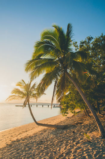 Beach Beach Photography Beachphotography Blue Sky Calming Fiji Luxury Palm Tree Palm Trees Philippines Relaxing Sand Serenity Summer Sun Tropical Tropical Climate Vacations