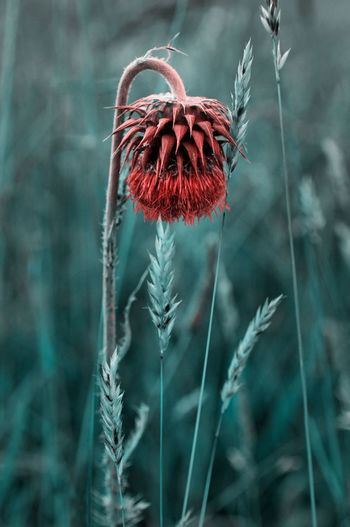 Infrared Beauty In Nature Close-up Day Flower Focus On Foreground Fragility Freshness Growth Infrared Photo Infrared Photography Infraredphotography Nature No People Outdoors Plant Red Stem