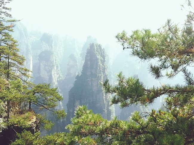 Tree Nature No People Pine Tree Pinaceae Growth Forest Outdoors Plant Day Beauty In Nature Mountain Sky Pandora China WuLingYuan High Angle View Neighborhood Map The Great Outdoors - 2017 EyeEm Awards The Great Outdoors - 2017 EyeEm Awards