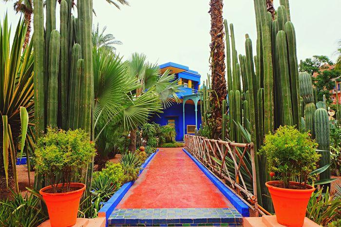Yves Saint Laurent Jardin Jardin Majorelle Majorelle Marrakech Morocco