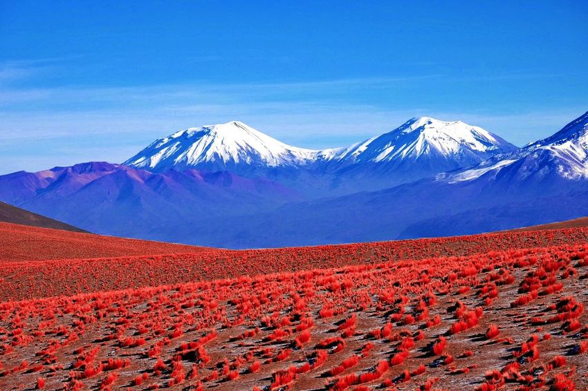 Atacama desert after rain ! Beauty In Nature Blue Sky Cold Temperature Desert Landscape Flowering Bushes Grassland Idyllic Landscape Mountain No People Scenics Snowcapped Mountain Tranquil Scene Tranquility