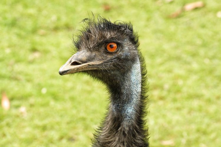 EyeEm Selects Bird Animal Themes One Animal Animal Wildlife Animals In The Wild Focus On Foreground Ostrich Day Close-up Animal Head  Outdoors No People Beak Nature Pet Portraits