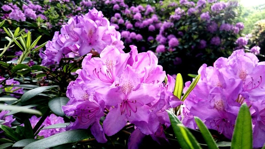 Close-up Closeup In Nature Flowers Lila Flowers Tiergarten Berlin Spring Violet Flowers Nature Ia Beautiful Wnjoyong Life Outdoors