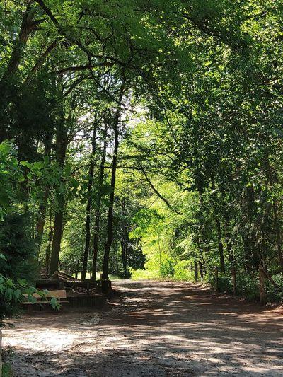 Waldweg Am