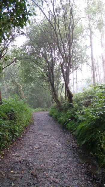 Camino CaminodeSantiago El Camino Jakobsweg Pilgern Pilgrimage Road Track Way Way Of Saint James Weg Fog Foggy Nebel Nebelig