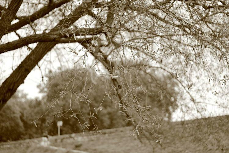 Nature Arbre Branches Mille Feuilles Canon Canonphotography Orléans Arbre Tout Nu 😆🌳🍂📷