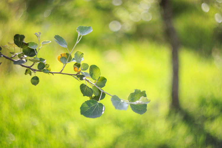 Sunny Beauty In Nature Bokeh Close-up Day Focus On Foreground Fragility Freshness Fruit Green Color Growth Leaf Leaves Nature No People Outdoors Plant Tree Vine - Plant Vineyard The Week On EyeEm EyeEmNewHere