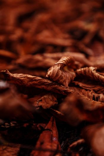 Dry No People Selective Focus Plant Part Leaf Backgrounds Brown Pattern Textured  Fragility Change Vulnerability  Beauty In Nature Day Autumn Leaves Close-up Full Frame Nature Plant