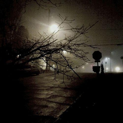 A very foggy Christmas